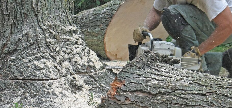 Sick tree cut by a arborist from Overland Park Tree Pros,KS